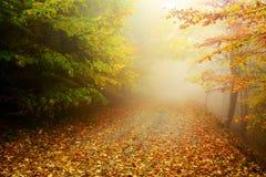 Colori di autunno della foresta Fotografia Stock