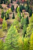 Colori di autunno in dolomia, Italia Fotografia Stock Libera da Diritti