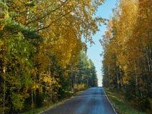 Colori di autunno e piccola strada in Finlandia immagine stock
