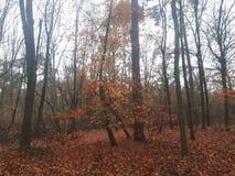 Colori di autunno in foresta immagini stock