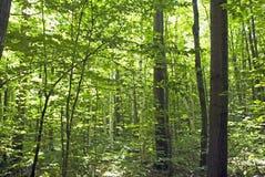 Colori di autunno in foresta fotografia stock
