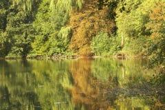 Colori di autunno in foresta con il lago fotografia stock libera da diritti