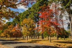Colori di autunno in Macedon, Australia Fotografie Stock Libere da Diritti