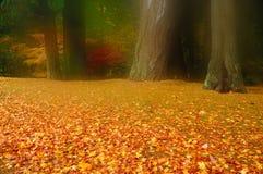 Colori di autunno in nebbia di primo mattino Immagini Stock