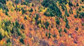 Colori di autunno nella foresta fotografia stock