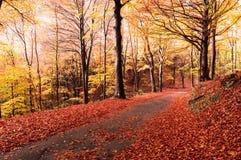 Colori di autunno nella foresta Fotografia Stock Libera da Diritti