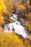 Colori di autunno nella foresta della Nord Carolina Immagini Stock