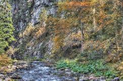 Colori di autunno nella foto a colori di HDR della foresta della montagna Fotografia Stock