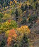 Colori di autunno nelle alpi italiane, la valle d'Aosta, Italia Fotografie Stock