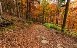 Colori di autunno, percorso nella foresta nella stagione di caduta Immagini Stock Libere da Diritti
