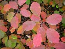 Colori di autunno: rosso, verde, giallo, arancio fotografia stock libera da diritti