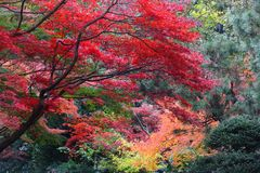 Colori di autunno di Shinjuku Fotografia Stock Libera da Diritti