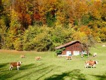 Colori di autunno in Svizzera Immagini Stock