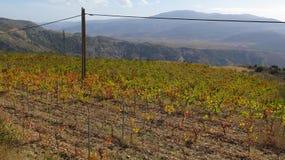 Colori di autunno in vigna spagnola Immagini Stock