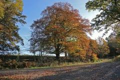 Colori di autunno in Weardale Inghilterra Fotografie Stock
