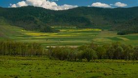 Colori di bellezza di estate Altai Fotografia Stock Libera da Diritti