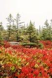Colori di caduta del parco nazionale di acadia Fotografia Stock