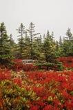 Colori di caduta del parco nazionale di acadia immagini stock