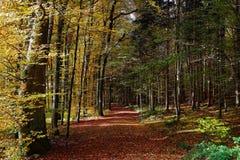 Colori di caduta della pista della foresta Immagini Stock Libere da Diritti