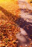 Colori di caduta di autunno in parco Immagini Stock Libere da Diritti
