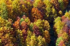 Colori di caduta di una foresta in alpi italiane Immagine Stock Libera da Diritti