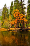 Colori di caduta di Yosemite Fotografia Stock Libera da Diritti