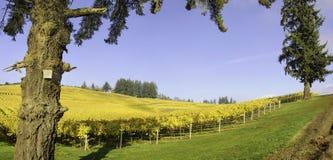 Colori di caduta e di agricoltura delle vigne dell'Oregon Fotografia Stock