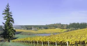 Colori di caduta e di agricoltura delle vigne dell'Oregon Fotografia Stock Libera da Diritti