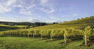 Colori di caduta e di agricoltura delle vigne dell'Oregon Immagine Stock