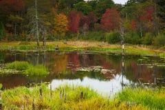 Colori di caduta in Maine Fotografie Stock Libere da Diritti