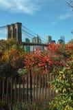 Colori di caduta nel parco del ponte di Brooklyn, New York, U.S.A. Immagine Stock