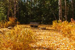 Colori di caduta nelle foglie fotografia stock