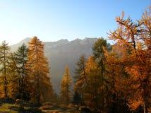 Colori di caduta vicino a Tamins, Graubuenden, Svizzera Immagini Stock Libere da Diritti