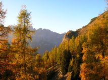 Colori di caduta vicino a Tamins, Graubuenden, Svizzera Fotografia Stock Libera da Diritti