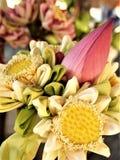 Colori di Lotus fotografia stock libera da diritti