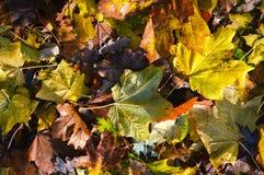 Colori di stupore dell'autunno e del periodo dei colori ricchi e vivi immagini stock libere da diritti