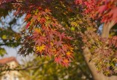 Colori differenti sull'albero fotografia stock libera da diritti