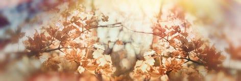 Colori dorati delle foglie di autunno in foresta Immagini Stock Libere da Diritti