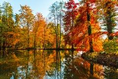 Colori dorati stupefacenti di autunno nella pista del sentiero nel bosco tabella variopinta della zucca dell'accumulazione di aut Fotografie Stock Libere da Diritti