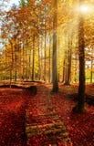 Colori dorati stupefacenti di autunno nella pista del sentiero nel bosco tabella variopinta della zucca dell'accumulazione di aut Immagine Stock