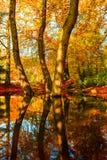 Colori dorati stupefacenti di autunno nella pista del sentiero nel bosco tabella variopinta della zucca dell'accumulazione di aut Immagine Stock Libera da Diritti