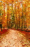 Colori dorati stupefacenti di autunno nella pista del sentiero nel bosco tabella variopinta della zucca dell'accumulazione di aut Immagini Stock Libere da Diritti