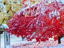 Colori e neve di caduta Fotografia Stock