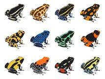 Colori e reticoli delle rane del veleno-dardo Fotografia Stock