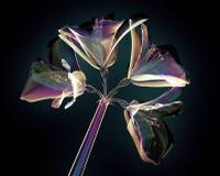 Colori il fiore di vetro isolato sul nero, Amaryllis royalty illustrazione gratis