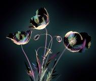 Colori il fiore di vetro isolato sul nero, il papavero royalty illustrazione gratis