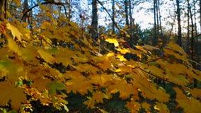 Colori iniziali di Autumn In The Forest Bright archivi video