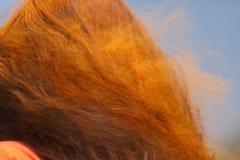Colori la polvere nei capelli di una donna Fotografia Stock Libera da Diritti