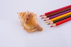 colori le matite di vari colori vicino ad una conchiglia Fotografia Stock Libera da Diritti
