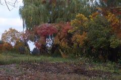 Colori luminosi dell'autunno Fotografia Stock